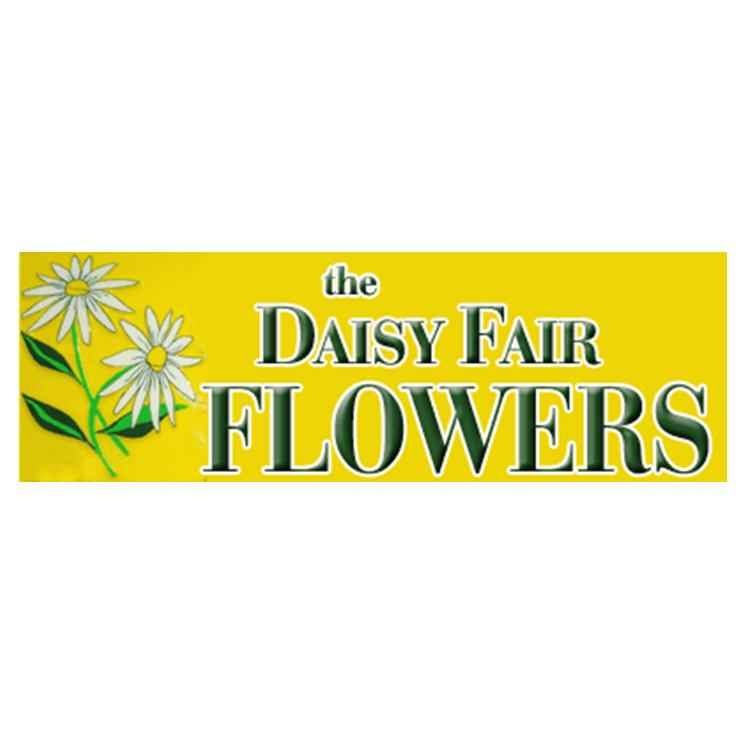 Daisy Fair Flowers